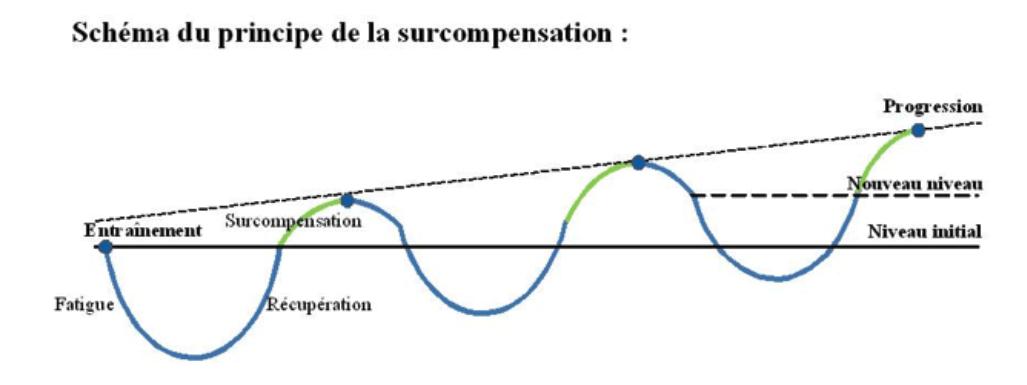 Une courbe expliquant le principe de la surcompensation